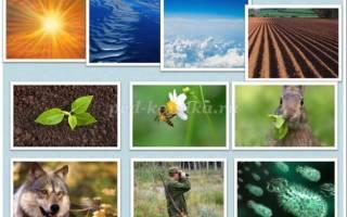 Сценарий экологического КВН для детей. Мы знатоки природы