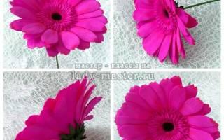 Розовая гербера из фоамирана своими руками. Мастер-класс