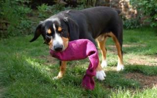 Игрушки для собак своими руками. Идеи