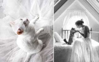 Свадебные котики к торжеству. . Часть 1