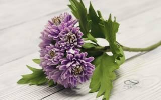 Цветы из фоамирана. Хризантема.