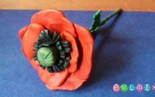 Цветы из пластилина: мак.