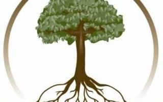 Создаём семейное дерево.