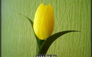 Тюльпаны из креповой бумаги.